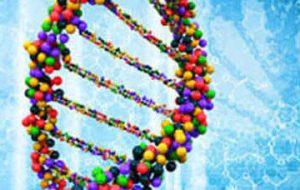 Scoperto il gene che regola la capacità di bruciare i grassi